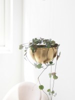 DIY Hanging Plant Lamp