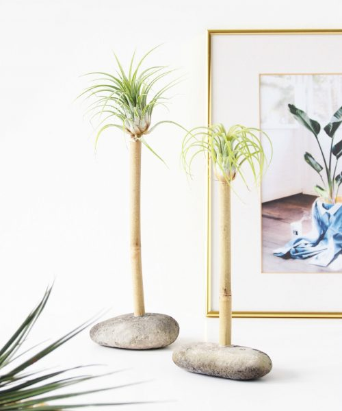 DIY Air Plant Palms